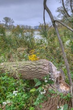 Hegewisch Marsh (Thomas Oord)