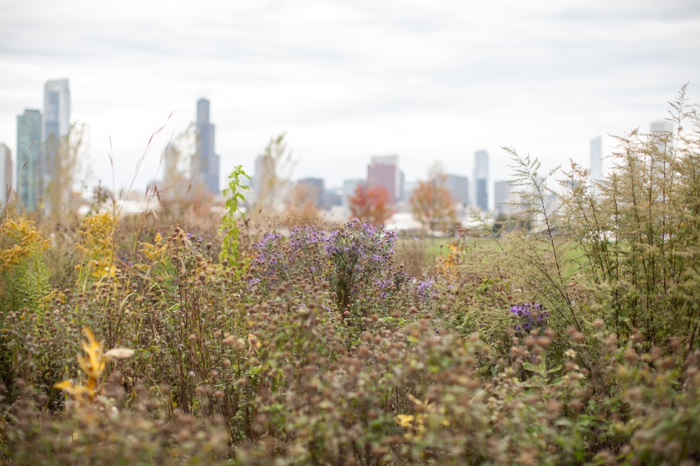 Northerly Island October 2015